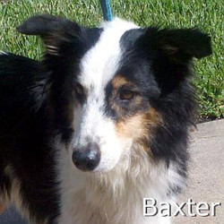 Baxter_TN.jpg