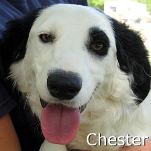 Chester_TN.jpg