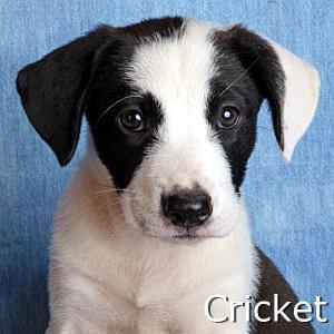 Cricket_TN.jpg