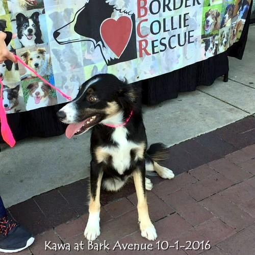Kawa at Bark Avenue 10-1-2016.jpg