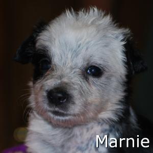 Marnie_TN.jpg