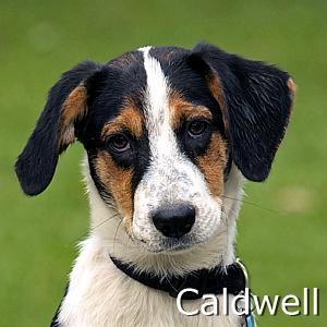 Caldwell_TN2.jpg