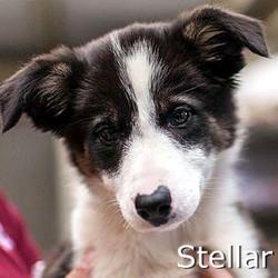 Stellar_TN.jpg