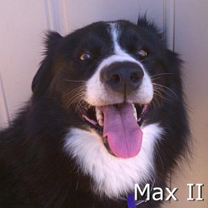 Max_II_TN.jpg