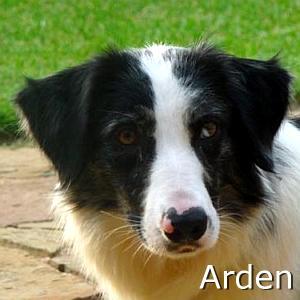 Arden_TN.jpg