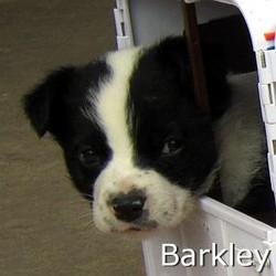 Barkley_TN.jpg