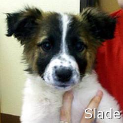 Slade_TN1.jpg