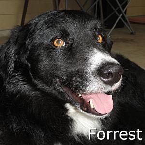 Forrest_TN.jpg