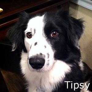 Tipsy_TN.jpg