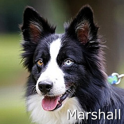 Marshall-TN
