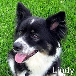 Lindy_TN.jpg