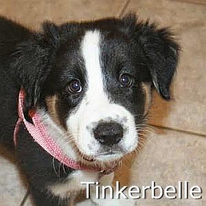 Tinkerbelle_TN.jpg