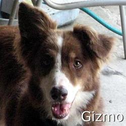 Gizmo_TN.jpg