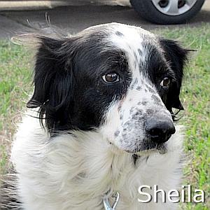 Sheila TN