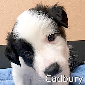 Cadbury-TN.jpg