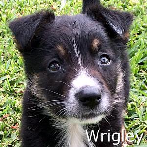 Wrigley_TN.jpg