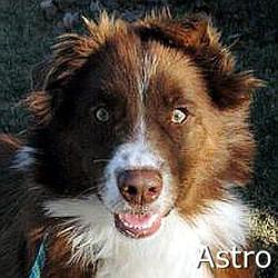 Astro_TN.jpg