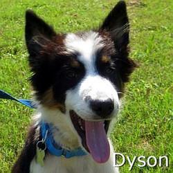 Dyson_TN.jpg