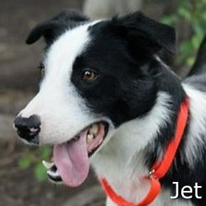 Jet_TN.jpg