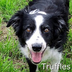 Truffles_TN.jpg