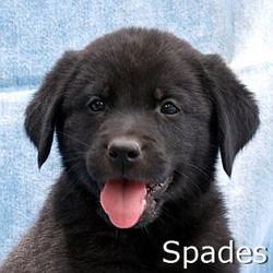 Spades_TN.jpg