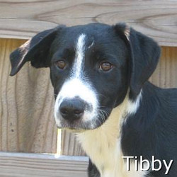 Tibby_TN.jpg