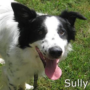 Sully_TN.jpg