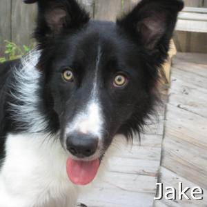 Jake_TN.jpg