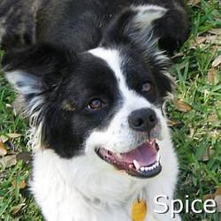Spice_TN.jpg