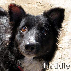 Haddie_TN