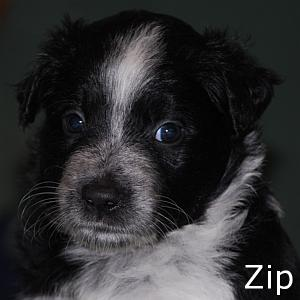 Zip_TN.jpg