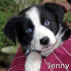 Jenny_TN.jpg