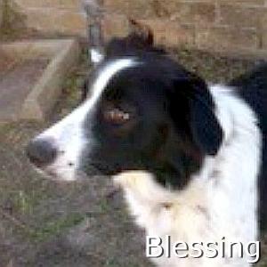Blessing_TN