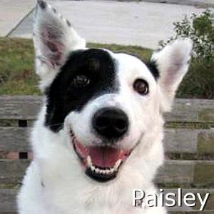 Paisley_TN.jpg