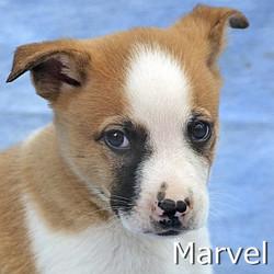 Marvel_TN.jpg