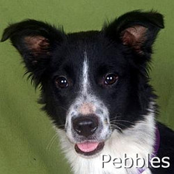 Pebbles_TN.jpg