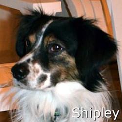 Shipley_New_TN.jpg