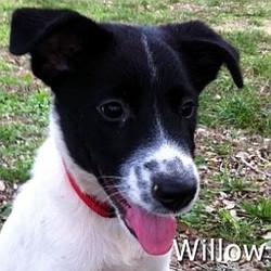 Willow_TN.jpg