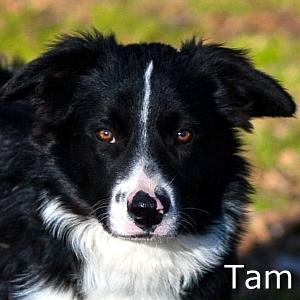 Tam_TN.jpg