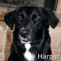 HArper_TN.jpg