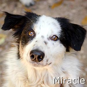 Miracle_TN.jpg