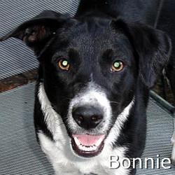 Bonnie2_TN.jpg