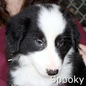 Spooky_TN.jpg