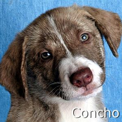 Concho_TN.jpg