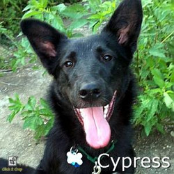 Cypress_TN.jpg