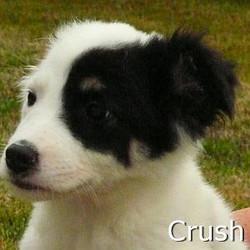 Crush_TN.jpg