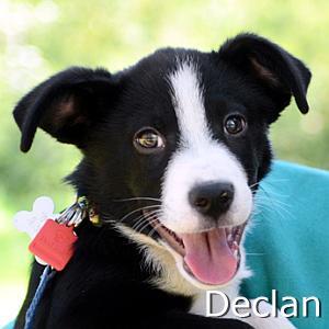 Declan_TN.jpg