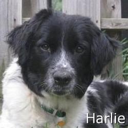 Harlie_TN.jpg