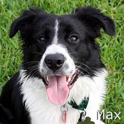 Max--TN.jpg