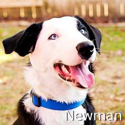 Newman_TN.jpg